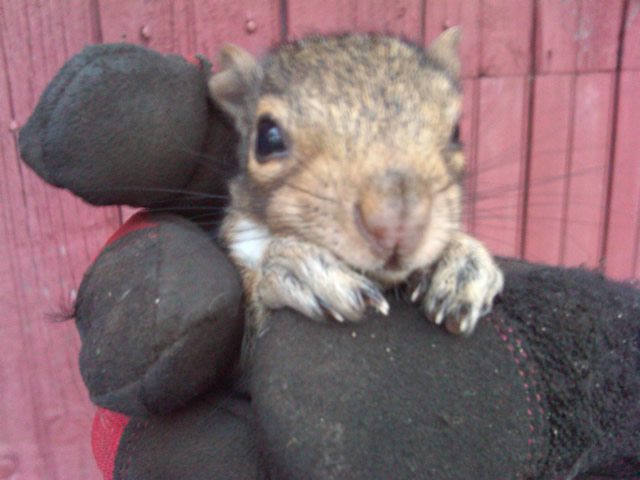 Squirrel Removal Heathcote  NY