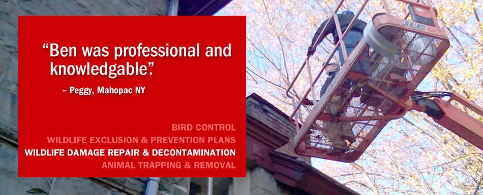 Wildlife damage repair and decontamination