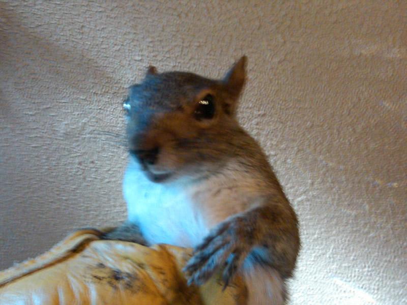 Baby Raccoons Squirrels And Skunks Wildlife Busters