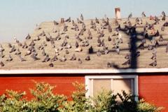 Bird Damage