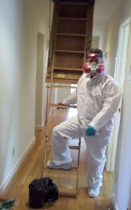 animal damage repair decontamination