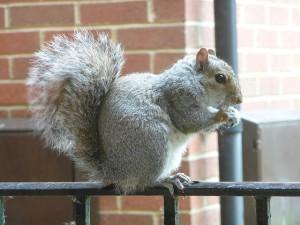 squirrels facts, information, habitats