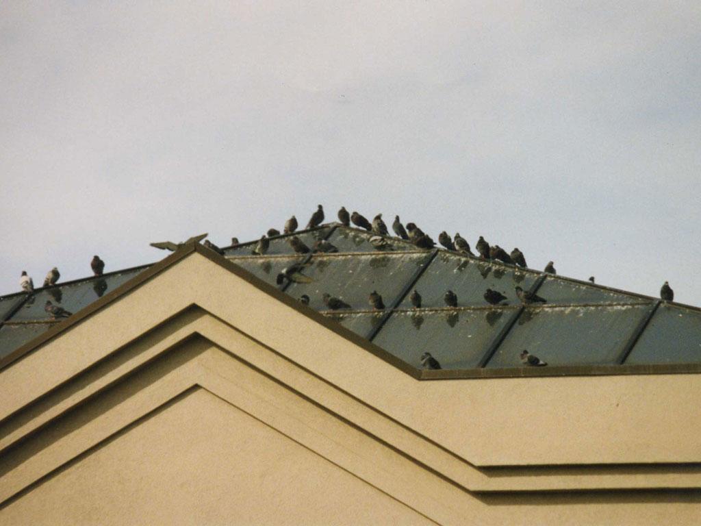 Birdsin the roof